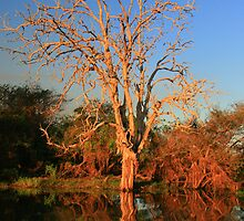 Kakadu 2 by David  Hibberd
