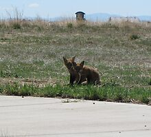 There goes the neighborhood (baby foxes) 03 by janetmarston