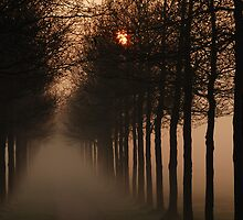A misty sunrise lane by jchanders