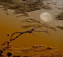 Moonscape V by Walter Colaiaco