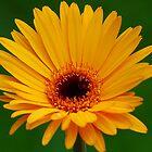 Flower by Scott A. Ray