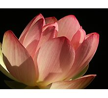 Backyard Lotus Photographic Print