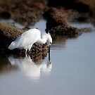 Snowy Egret by LjMaxx