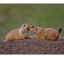 Prairie Dog Kiss Photographic Print