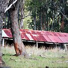 Blue Mountains Barn by Bev Woodman