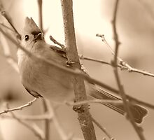 Bird in the Branches by kr1sta
