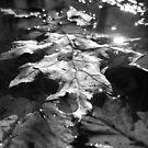 Leaves in a puddle by kr1sta