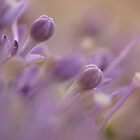 Purple flowers by Sara Hazeldine