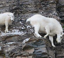 Rock Climbing Family by William C. Gladish