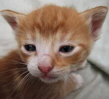 Close-up of Kittens Face by Andrielle