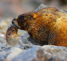 Parental Kiss by William C. Gladish
