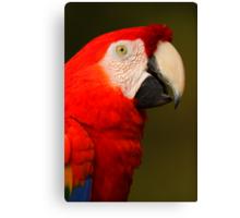 Scarlet Macaw Portrait Canvas Print