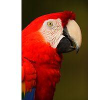 Scarlet Macaw Portrait Photographic Print