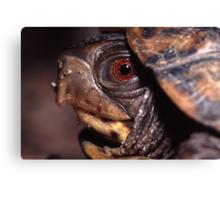 Turtle Portrait Canvas Print