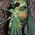 Cicada of Emerald &amp; Gold by William C. Gladish