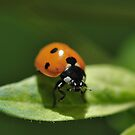 """A """"Lady(Bug)"""" is in the house. by Dennis Stewart"""