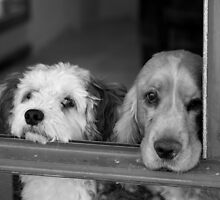 Dogs in waiting by Raj Deut