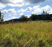 Golden Grass by Graham Mewburn