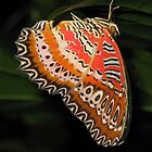 Butterfly by atkinnt