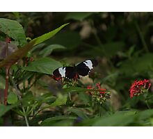 Black & White In Living Color, Blue & White Longwing Photographic Print