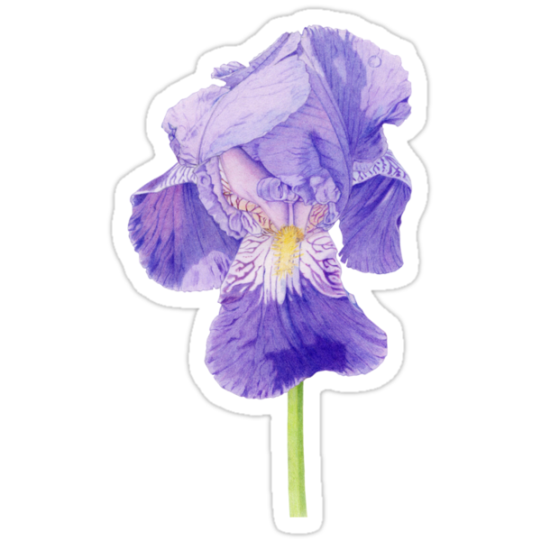 Purple Iris T-shirt by Mariana Musa