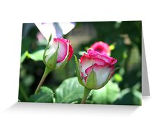 Rose Complexion Greeting Card