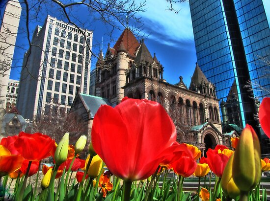 Boston in Bloom by LudaNayvelt