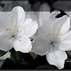 Beautiful Spring by imagic