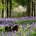 Bluebell Wood by Wolfiewolf
