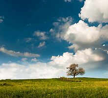 single tree in spring by peterwey