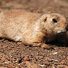 Crawling (Prairie dog) by Luci Mahon