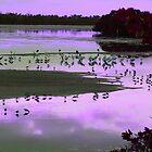 Purple Sunset at Ding Darling   177 Views by Rosalie Scanlon