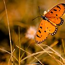 Butterfly by sandy1984
