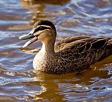 Quack by Josie Eldred