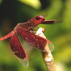 literal dragonfly by synister1
