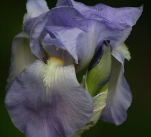 Just Flowers by Pamela Jayne Smith