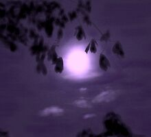 Moonglow by Dawn B Davies-McIninch