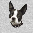 BOSTON TERRIER by CRYROLFE