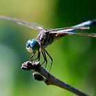 Bug eyes by Anna Williams