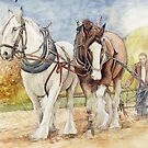 Shire Horses  by morgansartworld
