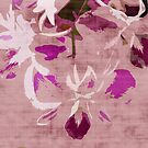 Orchids 2 by ginaellen