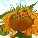 Sunny Side Down - cropped by Deb  Badt-Covell