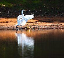 A Light Landing by David Towey