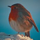 Fluffed up robin ......... by jdmphotography