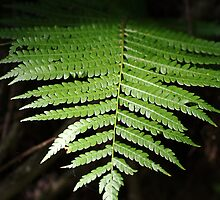 One Frond by Peri