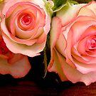 Becs Rose by bettyb