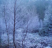 Blue Frosty Trees by pipmorck