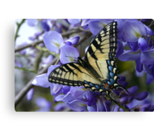 Wysterious Swallowtail Canvas Print