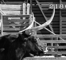 Texas Longhorn & Railcar by LynnH