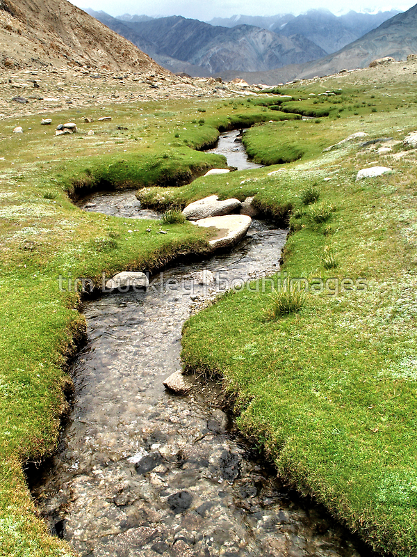 mountain stream. ladakh, india by tim buckley   bodhiimages